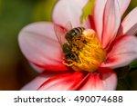 bee on the flower. macro