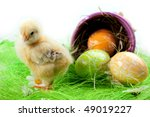 young chick  painted eggs and... | Shutterstock . vector #49019227