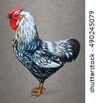 rooster american drawing on... | Shutterstock . vector #490245079