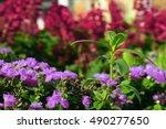 beautiful flowers on the meadow | Shutterstock . vector #490277650