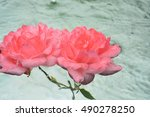 Two Pink Roses On Water...