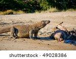 komodo dragon having meal on...   Shutterstock . vector #49028386