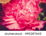 close up of many flower petals... | Shutterstock . vector #490287643