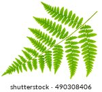 Leaf Fern Isolated On White...