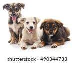 Stock photo three puppies isolated on a white background 490344733