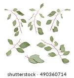 eucalyptus twigs. isolated set... | Shutterstock . vector #490360714