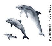 Hawaiian Dolphin Sketches...