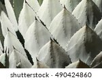 Small photo of Agave Palmeri Plant Pattern, California