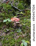 Small photo of Mushroom growing in the forest of the Adirondacks, New York