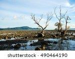 Old Mangrove Trees On Rocks...