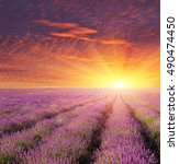 lavender beautiful meadow.... | Shutterstock . vector #490474450