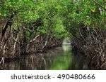 Mangrove Trees Along The...