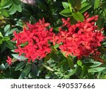 spike flower branch 2 | Shutterstock . vector #490537666
