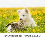 Stock photo cat and dog lying together on a dandelion field 490582150