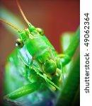 The Portrait Of Funny Locusta...