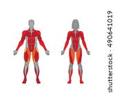 muscular system on a white... | Shutterstock .eps vector #490641019