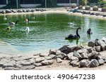 The Zoo In The Pond Swimming...