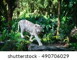 white tiger walks in green... | Shutterstock . vector #490706029
