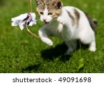 Stock photo spielende katze 49091698