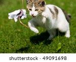 Stock photo spielende katze 49091698