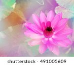 lotus flower with a pastel... | Shutterstock . vector #491005609