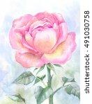 pink garden rose  watercolor...   Shutterstock . vector #491030758