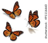 Stock photo beautiful three monarch butterfly isolated on white background 491116660