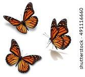 beautiful three monarch...   Shutterstock . vector #491116660