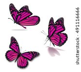 Stock photo beautiful three pink monarch butterfly isolated on white background 491116666