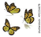 beautiful three yellow monarch... | Shutterstock . vector #491116678