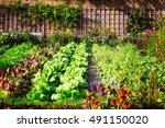 Vegetable Garden In Late Summe...