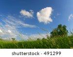 Grassy Field On Windy Summer Day