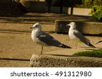 Pair Of Seagulls Perched On A...