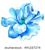 Blue Flower Sketches Graphic