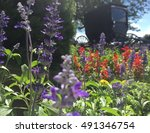 Small photo of Amish buggy picture and flower garden view.