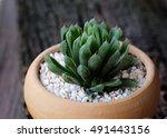 succulent planted in pot with... | Shutterstock . vector #491443156