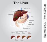 The Liver Is The Only Human...