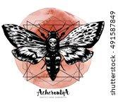 death's head hawk moth and... | Shutterstock .eps vector #491587849