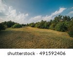 fringle of the forest   Shutterstock . vector #491592406