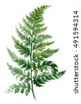 Fern Painted With Watercolors...
