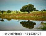 Beautiful Tree Reflection On...