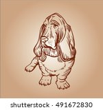 The Basset Hound. Short Legged...