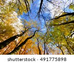 Trees In Autumn On Sky...
