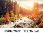 beautiful colorful autumn... | Shutterstock . vector #491787760