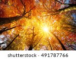 autumn sun warmly shining... | Shutterstock . vector #491787766