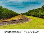 Railroad Track Passing Through...