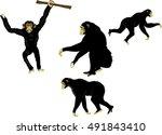 Monkeys Black Chimapanzees In...