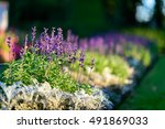 amazing nature of ppurple... | Shutterstock . vector #491869033