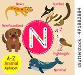 cute children zoo alphabet n... | Shutterstock .eps vector #491882884