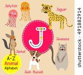 cute children zoo alphabet j... | Shutterstock .eps vector #491882914